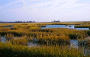 September Salt Marsh